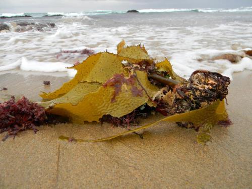 Autumn colours on the beach