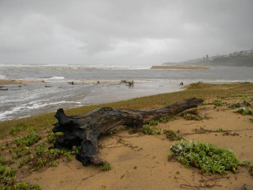 Driftwood on Elysium Beach