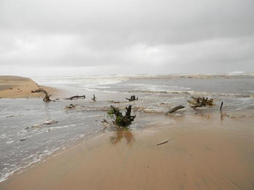 Driftwood in Mtwalume River mouth Elysium Beach