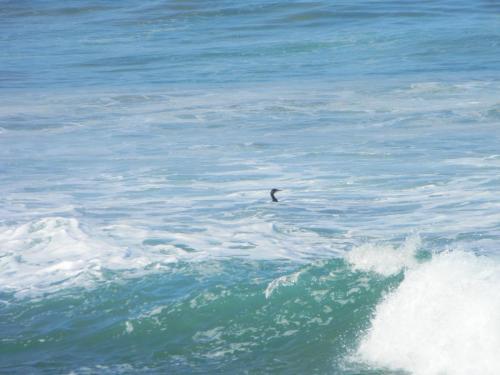Elysium Beach 3